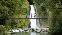 Half-Day Milford Track Guided Hiking Tour, Milford Sound Natural Activities & Attractions