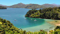 Full Day Queen Charlotte Kayak and Walking Tour from Picton, Picton Water Activities