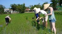 Afternoon Countryside Bike Tour from Hoi An