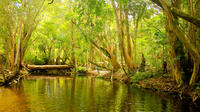 Private Half Day Tour: Exclusive World Heritage Rainforest and Waterfall Tour from Cairns image 1