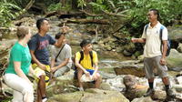 Half Day Jungle Trek from Langkawi