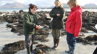 Private Tour: Bog Beach and Connemara National Park Ecology Walk from Letterfrack image 1