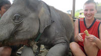 2-Day With No Riding To Elephant Retirement Park with Homestay and Meals