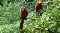 5-Day Madidi and Pampas Amazon from La Paz