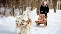 St. Petersburg Winter Peterhof Tour and Malamute Sledding