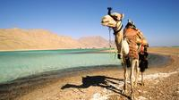 2 Hour Camel Safari to Wadi Bida or Blue Lagoon from Dahab