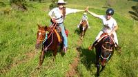 Country Day Ride from Rainbow Beach, Rainbow Beach Tours and Sightseeing
