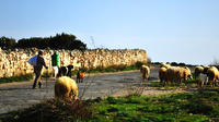 Maltese Nature and Agriculture Day Trip with Countryside Walk and Farm Visit