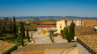 Penedes Region Wine and Food Tour with Transport from Barcelona