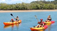 Burleigh Head National Park to David Fleay Wildlife Park Kayaking Tour from the Gold Coast