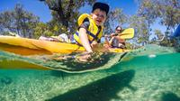 Half-Day Gold Coast Kayak Tour Including Burleigh Heads National Park, Tallebudgera Creek and David Fleay Wildlife Park