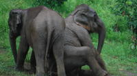 Baanchang Elephant Park Conservation Experience from Chiang Mai