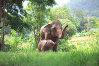 Elephant's Friend Day: Full-Day Elephant Experience at Baanchang Elephant Park in Chiang Mai