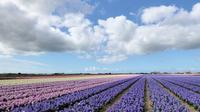 Private Tour: Tulip Fields of Holland Day Tour with Bike Tour from Amsterdam