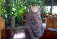 Eco-Village Tours from Belize City image 1