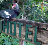 Overnight Orchid Garden Eco-Village Lodge from Belize City