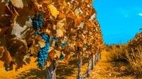 7-Day Best of Mendoza and Buenos Aires Tour: Culture, Wine and Food  image 1