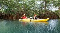 Samara Beach Wildlife and Mangrove Kayaking Tour