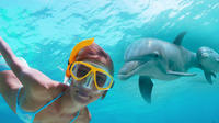 Shell Island Dolphin and Snorkeling Combo