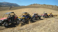 Wineries Tour of Ronda by Buggy