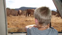 Private Small-Group Full-Day Safari: Tsavo East National Park from Mombasa