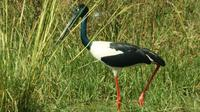 Private Day Trip: Bharatpur and Keoladev Ghana Bird Sanctuary from Agra