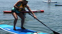 Port Adelaide Dolphin Sanctuary and Ships Graveyard Stand Up Paddle Board Tour image 1