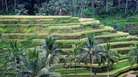Bali Sightseeing Day Trip from Temples, Volcano to Hot Spring Tour Only