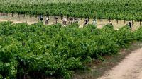 Cape Winelands Bike Tour  and Wine Tasting from Cape Town