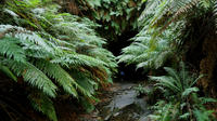 Glow Worm Tunnels and the Lost City Day Trip from Sydney