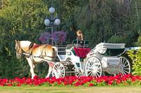 Horse-Drawn Carriage Tour of Beacon Hill Park