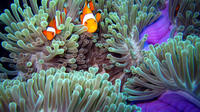Full-Day Racha Noi and Racha Yai Snorkeling from Phuket