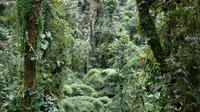 Monteverde One Day Tour from La Fortuna