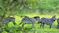 Lake Mburo National Park Guided Day Tour from Kampala