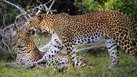 Private Tour: Wilpattu National Park Safari