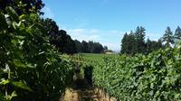 Wine Tour of Willamette Valley with a Personal Sommelier