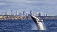 Sydney High-Speed Whale-Watching and Sightseeing Cruise image 1