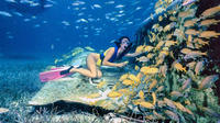 Private Half-Day Snorkeling Charter in Nassau image 1