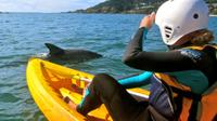 Byron Bay Combo: Hinterland Tour Including Minyon Falls and Kayaking with Dolphins image 1