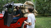 Private Coffee Plantation Tour Including Lunch in Chinauta
