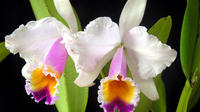 Private Orchids Tour and Tequendama Waterfalls