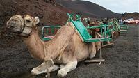 Camel Ride in the Dunes of Maspalomas