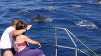 Amazing Land and Sea Pack Jeep Adventure with Dolphin Watching