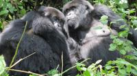 Gorilla Trekking and Wildlife Game Drives in Rwanda and Burundi