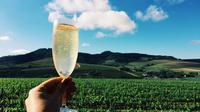 Champagne Cellar tour and tasting