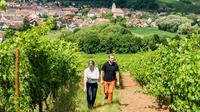 Tour and tasting at the winery, Fragmented Selection in Alsace