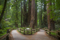 Muir Woods, Wine Country and Sausalito Town & Ferry