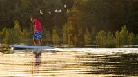 Abu Dhabi Mangroves Stand-Up Paddle Board Guided Tour