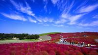 Day Trip to Hitachi Seaside Park and Ami Premium Outlet from Tokyo Including Seasonal Fruit Picking