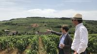 Small-Group Day Tour from Paris to Beaune including Two Producers and Lunch